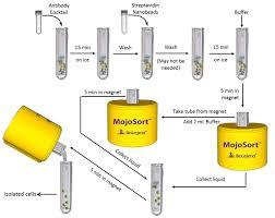 biolegend protocol mojosort mouse neutrophil isolation kit protocol