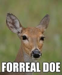 Oh Deer Meme - the rambler i have a problem doe