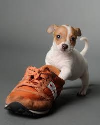 Photographers In Baton Rouge 35 Best Pet Photography Images On Pinterest Pet Photographer