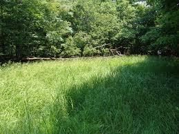 Pennsylvania vegetaion images Vernal pools vegetation jpg