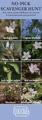 us native plants 24 best native iowa plants images on pinterest native plants