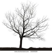 leafless tree stock images royalty free images u0026 vectors