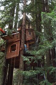 Cool Tree Houses 429 Best Cool Tree Houses Images On Pinterest Treehouses