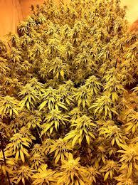 best hps grow lights mh hps grow light tutorial plus cheap ways to exhaust heat grow