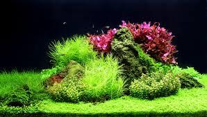 Aquascape Freshwater Aquarium Aquatic Trends