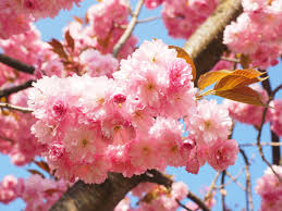 free images tree branch fruit flower petal bloom food