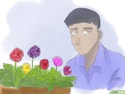 dalia in vaso comment cultiver des dahlias dans des pots 23 é
