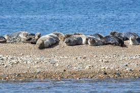 seals shipwrecks u0026 cuttyhunk island