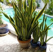plante de chambre 10 plantes que vous devriez avoir dans votre chambre pour mieux dormir