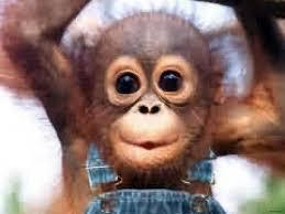 Baby Monkey Meme - awesome funny baby monkey memes daily funny memes