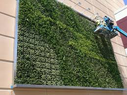 the ultimate guide to living green walls ambius