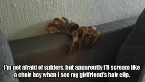 Afraid Of Spiders Meme - bahahaha cries i m corner i m afraid of my hair clips heck i m
