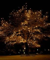 image result for oak trees lit with lights home