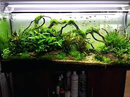 aquascaping layouts with stone and driftwood aquascaping layouts the nature style planted tank awards appartment