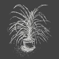 house plant in flower pot isolated on dark gray background palm