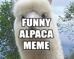 Alpaca Memes - funny memes funny alpaca feel good happy news