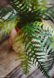 Fern N Decor Potted Paper Ferns By Lia Griffith Project Home Decor
