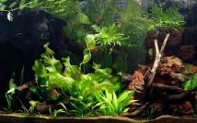 Aquascape Online Aquascape Designs Inc Online Store