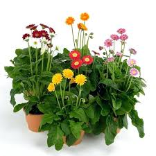 indoor plants that don t need sunlight outdoor plants that need little light a potted garden flowers