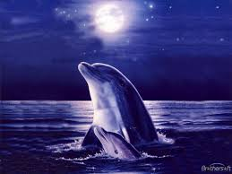 free dolphin wallpapers for desktop wallpaper hd wallpapers