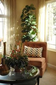 Winter Indoor Garden - bringing your houseplants indoors for winter