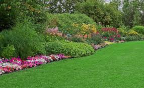 rutgers njaes lawn and lawn alternatives