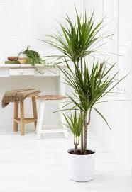 Plants Easy To Grow Indoors 15 Best Houseplants For Beginners Balcony Garden Web