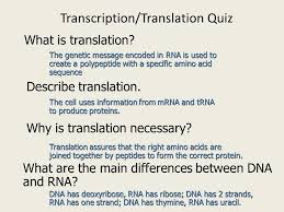 transcription and translation ppt video online download