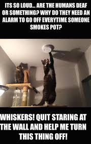 Amusing Memes - amusing memes to make you laugh out loud 38 pics izismile com