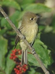 native san francisco plants golden gate audubon societymaking the case for biodiversity