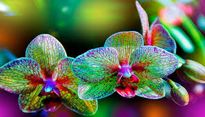 Orchids Care Orchid Care Steps Full Guide Floriculture Care House Plants