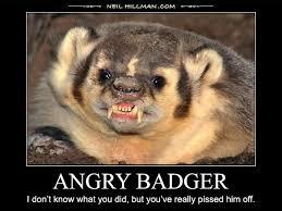 Badger Memes - american badger meme badger best of the funny meme