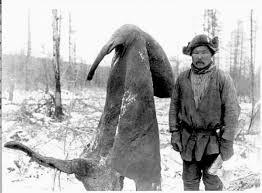 mammoths elephants wooly rhinoceros