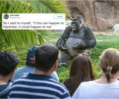Gorilla Memes - internet s hottest new meme is this gorilla giving a ted