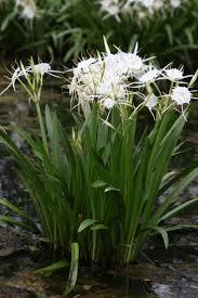 texas native plants nursery 958 best plants for houston images on pinterest landscaping
