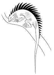 free lizard coloring pages get coloring pages