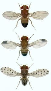 best 25 gnats in kitchen ideas on pinterest fruit fly catcher