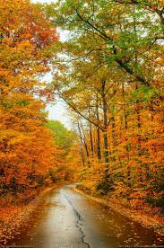 best 20 autumn pictures ideas on pinterest autumn leaves fall autumn road sangerville maine by greg hartford