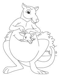 printable kangaroo coloring pages for kids coloringstar