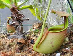 wildtype native plant nursery mi lake home garden march 2015