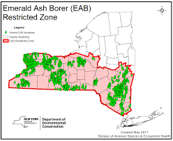 emerald ash borer map in the losing battle for ash trees the survivors ncpr