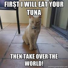 Evil Cat Meme - world domination cat evil kitty know your meme