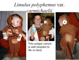 science themed halloween costumes the photos themselves the