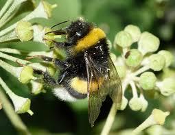 free images flower pollen flora fauna invertebrate close up