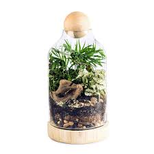 Diy Kit by The Lucky Gardener Diy Terrarium Kit Make A Terrarium