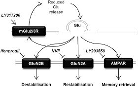 double dissociation of the requirement for glun2b and glun2a