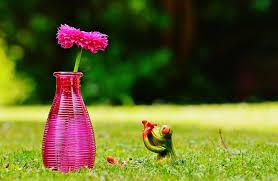 Frog Flower Vase Free Photo Vase Flower Frog Funny Cute Free Image On