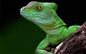 interpretation of a dream in which you saw lizard