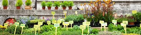 Unm Campus Map Home U0026 Garden Classes Unm Continuing Education
