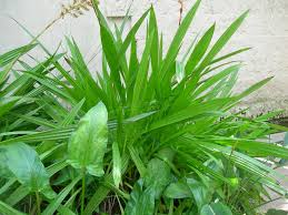 green plants green plants spiky leaves by lilbet on deviantart